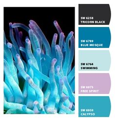 ‿✿⁀ Blue purple marine sea life reef ‿✿⁀ ColorSnap by CNH