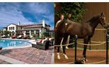 Nine Thoroughbred Yearlings Who Cost More Than Celeb Homes