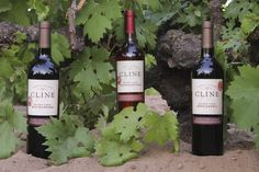 Our Wines | Cline Cellars in Sonoma, Ca.