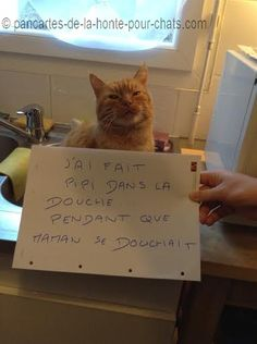 1.rouquin-pancarte-de-la-honte-pour-chats« I peed in the shower… while mum was having a shower » #lolcats #shameyourpet #shameyourcat #cat #cats #chats