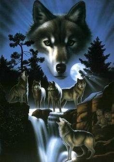 meute de loups dans la nuit avec une cascade #loups