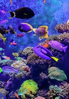 Tropical fish and coral