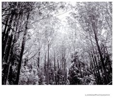 Natural light © Liz Irene Photography.