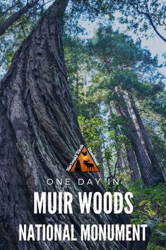 Looking to spend the day in outdoors without getting too far from San Francisco. Here is how to make the most of one Day in Muir Woods National Monument.  #muirwoods #califoriana #nationalparks #nationalpark #nationamonument #findyourpark #nationalparkobsessed #nationalparkgeek
