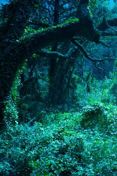 Spring Green, The Enchanted Wood  photo via villians