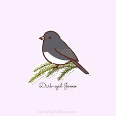 #Dark-eyed #Junco #backyard #nwdbirds #nextweeksdream #birdsticker #kawaii #illustration #drawing #plannerstickers #birdlovers #birds #birding #birdwatching #nuts_about_birds #plan #planner #plannercommunity #planneraddict #plannerlove #plannergirl #plannerstickers #erincondrenlifeplanner #stickers