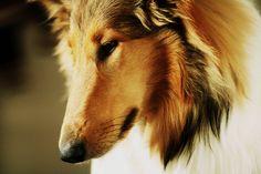 pose by janda.deviantart.com on @deviantART