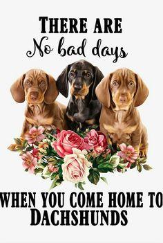 Dachshund Quotes, Dachshund Art, Dachshund Puppies, Daschund, Dachshunds, Dogs And Puppies, Doggies, When You Come Home, No Bad Days