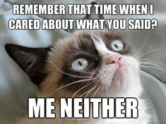 18 Times Grumpy Cat Said Exactly What He Thinks Of Stupid People - World's largest collection of cat memes and other animals Funny Grumpy Cat Memes, Funny Animal Memes, Funny Animal Pictures, Funny Cats, Funny Animals, Funny Memes, Hilarious, Animal Jokes, Funny Quotes