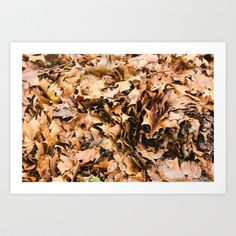 Golden Leaves Art Print by Golden Sabine Golden Leaves, Leaf Art, Art Prints, Photography, Design, Decor, Art Impressions, Photograph, Decoration