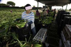 Farmworker Women Awarded $17 Million in Sexual Harassment Suit -- Feminist Majority Foundation Blog