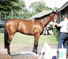 Barbaro Horse | ... from Hoofcare + Lameness Journal: Updates on Barbaro: Surgery Complete