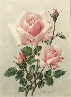 View Pink roses by Jan Voerman Jr. Browse upcoming and past auction lots by Jan Voerman Jr. Floral Vintage, Vintage Flowers, Botanical Drawings, Botanical Prints, Watercolor Flowers, Watercolor Art, Vintage Rosen, Raindrops And Roses, Rose Pictures