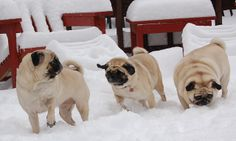Snowy days are best when you can spend them with friends.
