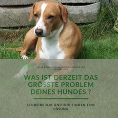 Schreibe mir das derzeit größte Problem deines Hundes und wir finden eine Lösung. www.tierenergetik-tirol.com/ Dogs, Animals, Writing, Pet Dogs, Animales, Animaux, Doggies, Animal, Animais