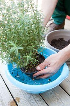 Planter des plantes aromatiques sur son balcon
