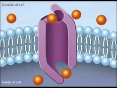 ▶ How Facilitated Diffusion Works [HD Animation] - YouTube