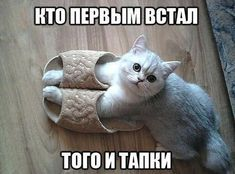 Васи.нет > Васины посты