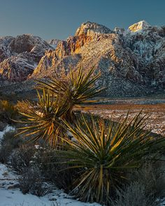 ✮ Red Rock Canyon Sunrise - Nevada