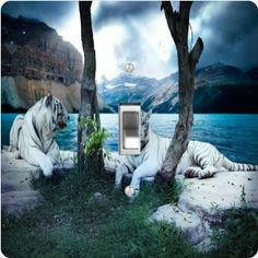 """Rikki KnightTM White Tigers - Single Toggle Light Switch Cover by Rikki Knight. $13.99. Masonite Hardboard Material. 5""""x 5""""x 0.18"""". Glossy Finish. For use on Walls (screws not included). Washable. The White Tigers single toggle light switch cover is made of commercial vibrant quality masonite Hardboard that is cut into 5"""" Square with 1'8"""" thick material. The Beautiful Art Photo Reproduction is printed directly into the switch plate and not decoupaged which make these Light Swit..."""