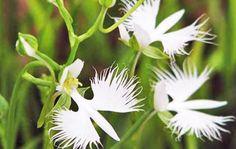 garsas-orquídea-bioretro