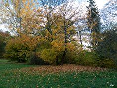 Ilmpark-Herbst / 2016