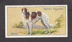 1936 UK Dog Art Body Portrait Ogden's Cigarette Card BORZOI RUSSIAN WOLFHOUND