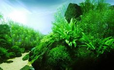 Beautiful Aquascaping Photo Collection - Quertime