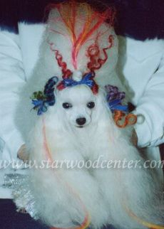 creative dog grooming school in Thailand......Bride of Frankenstein?