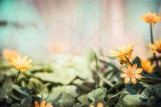 Pilewort blooming in garden by VICUSCHKA on @creativemarket
