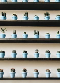 30 Stunning Ways To Wall Display House Plants With Cactus Cacti And Succulents, Planting Succulents, Cactus Plants, Planting Flowers, Garden Plants, Cactus Pot, Cactus Flower, Air Plants, Indoor Plants