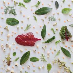 Julie Lee's Food Collages