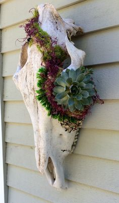 Antique Baby Moose Skull, Moss, Succulent Planter