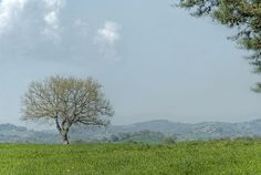 La primavera sta arrivando anche in Maremma - Spring is coming in Maremma too (Maremma, Tuscany, Italy) by ricsen, via Flickr