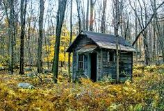 Image result for shack in the woods