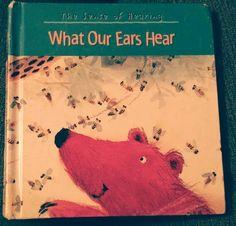 Fonte, What Our Ears Hear, senses, ears, hearing, animals, rain