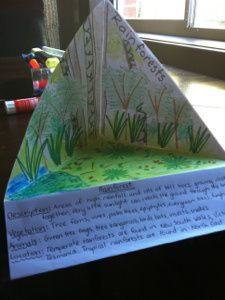 LOVE this idea for studying biomes this year