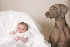 7 Tips for Preparing Your Dog for a New Baby