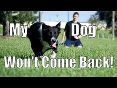 My Dog Takes Off and Won't Come Back! How to Train Your Dog - YouTube #DogObedienceTipsandAdvice