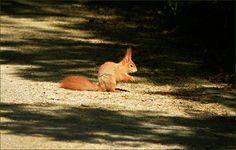 Eichhörnchen in der Sonne - Jahreszeiten - Galerie - Community