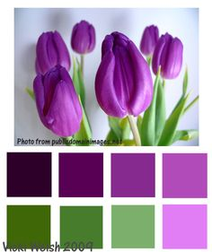 Color Palette - Purple Tulips