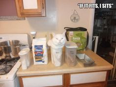 boxes-are-a-cats-only-weakness-22-photos-27.jpg 600×450 pixels