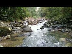 Binna Burra - Gwongoorool Track - YouTube