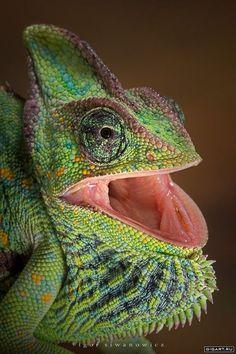 Funny Wildlife, Igor Swinanowicz Photography http://calgary.isgreen.ca/