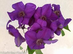 Clematis purple Lavender Flowers, Cut Flowers, Clematis, Purple, Blue, Floral Wreath, Wreaths, Seasons, Plants