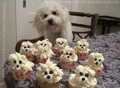 puppies + cupcacks = pup cackes