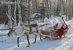 Santa Claus in reindeer sleigh in Finnish Lapland