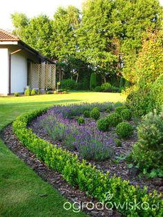 Obwódki z bukszpanu - strona 20 - Forum ogrodnicze - Ogrodowisko