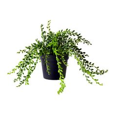 FEJKA Artificial potted plant - IKEA
