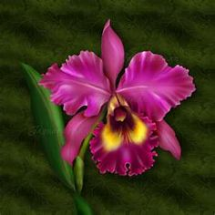 Every Easter my dad get's my mom an orchid like this to wear to church.  Beautiful!